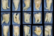 dentist life