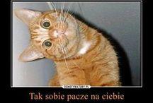 koty ^,^