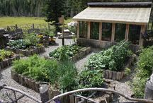Garden: Raised Beds