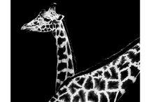 Nicolas Evariste : Dark Zoo / Dark Zoo by Nicolas Evariste - Black and White Animal Photography
