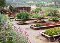 Garden / by Debbie Beachboard
