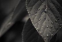 Black&White / by Inna Rexina