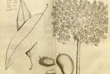 Botánica tropical