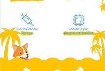 Infographies et conseils pour animaux / Découvrez tous nos conseils pour prendre soin des animaux sous forme d'infographie.