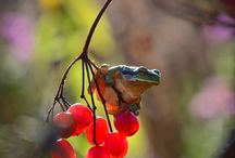 Wildlife / stunning pictures and pins from the beautiful wildlife