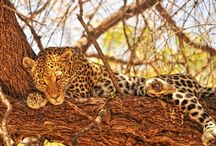Safari experiences / Safari experiences to be enjoyed in Southern Africa, from http://www.venture-to-africa.com/