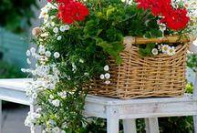 Garden Idea's / by Tracy Stewart