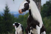 Animals:D