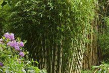 Siergrassen en bamboo