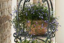Garden /pots ideas