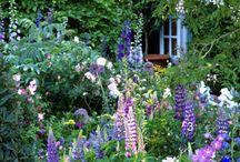 mooie tuinen / Nieuw Project