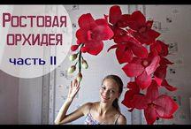 Ростове цветы
