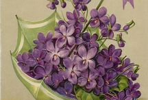 kvety obrazy