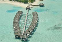 Maafushivaru / Maldivler Maafushivaru adası hemen yanında sahip olduğu Lonubo adası ile birlikte Maldivlerin en keyifli otellerinden biridir. Su üzeri Villalarının etrafı tamamen kumdur, mercan pek bulunmaz. Bu sebepten Türk misafirler için çok uygundur. Adada bulunan restoran ve kafe bölümleri çok başarılıdır. Tesis hakkında daha detaylı bilgi için; http://www.maldiveclub.com/maldivler-otelleri/maafushivaru
