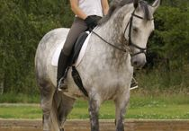 Dressage hints and tips.