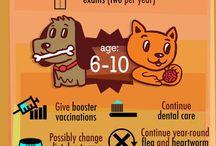 Helpful Pet Care Tips
