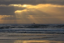 Heceta Beach - Florence Oregon / Thing's you might see while walking on Heceta Beach