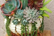 Potted plants / by Christine Mason