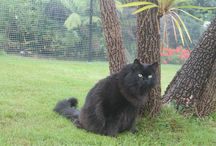 Cat Enclosures Around the UK / Cat Enclosures and Cat Gardens from around the UK, in stalled by our team of cat containment experts.