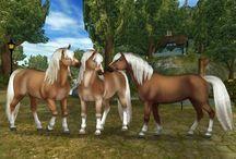 SSO Horses / Beautiful horses! ~ SSO