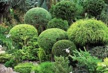 jardin classique/lido