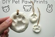 Pets!  / Cat and dog DIY
