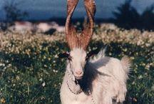 Ref: Horns & Antlers