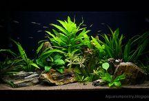 Freshwater Tanks