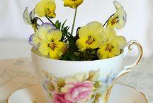 Violas & Pansies / by Janie Breon