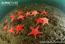 Aquarium / by Elizabeth Bailey