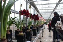 Glasshouses / Glasshouses - greenhouses, glasshouses, wonderful places to grow plants and garden under shelter.