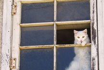 Cat in the Window / Cat in the window