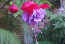 flowers / by Kay Glann