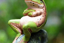 grenouille / by patricia hocquaux-wencker