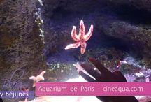 Aquarium de Paris / Visite de l'Aquarium de Paris http://www.cineaqua.com/