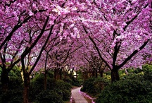 Beauty Nature Color