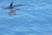 Weekly Best of WildQuest 2016 / The selection of best photos from WildQuest Dolphin Swim retreats in 2016.