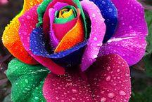 Flower & Plant Beauty