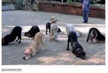 Doggos <3