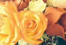 Flowers / Flowers