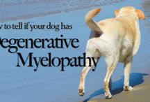 Canine Homeopathy and Nutrition