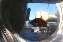 Conero life / Foto della vita del nostro staff e dei nostri ospiti estivi ed invernali e dei nostri e loro animali. / by Hotel Residence Il Conero 2, Numana, regione Marche