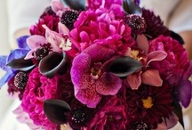 Bridal Bouquet / by Katy Bissell
