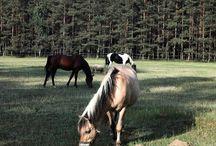 HORSE - KONIE / XXI w