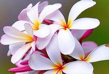 φανταστικα λουλουδια