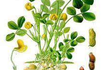 Laminas de planats / Plants drawing sheets