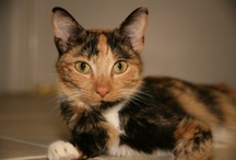 Adoptable Cats / Some of the adorable kitties available for adoption at our shelter
