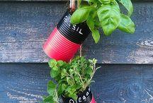 Greenhouse plants pots & colours