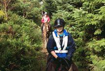 Horse riding ireland / Riding horses for leisure ireland