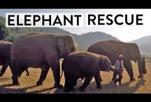 Elefanti - Elephants